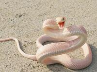 뱀나오는꿈 해몽풀이