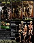 인간, 네발 짐승, 침팬지 그들의 운동은 어떤 차이?