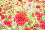 이름 모를 꽃