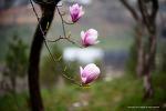 봄의 소식3