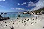 [남아공 여행] 볼더스비치의 아프리카 펭귄