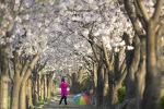 봄날애...