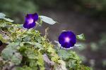 철마 꽃 나들이 (철마 연꽃지)