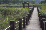 가을의 안산 시화호 갈대습지공원