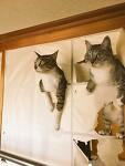 Cats. 나불렀어?