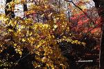 가을 붙잡기(2)