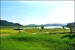 창녕  6월의 남지수변공원 .억새전망대