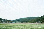 하동 이병주문학관, 코스모스와 메밀꽃 가을 가득한 풍경