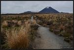 [뉴질랜드] 통가리로 국립공원, 타라나키 폭포 트랙