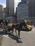 [#난생처음뉴욕여행 셋째날] #2 뉴욕의 자랑 #센트럴파크에서 걷고, 이야기하고, 하늘 보고, 바람을 느끼다