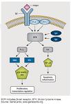 BKT inhibitors (BTK 저해제) 및 신약개발 현황