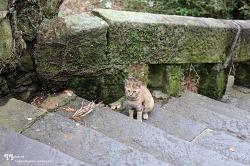 나가사키 어느 뒷골목에서 만난 고양이들
