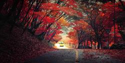 내장산의 가을