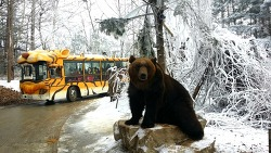 [에버랜드 동물원 이야기] 불곰은 겨울을 좋아해!