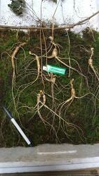 산삼도감 자료 (산원초)