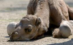 낙타를 삼키는 자들의 정체