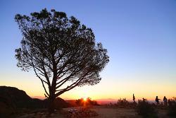 트리오브라이프 트레일(Tree of Life Trail), '지혜의 나무' 일출과 워너브라더스 스튜디오 구경(?)