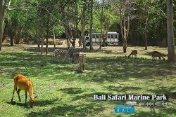 [스티커 in 발리] 코끼리한테 뽀뽀 받아 봤어? 발리 사파리 마린 파크(Bali Safari Marine Park) 생생체험기!
