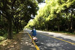 [브롬톤 자전거 여행] 몹쓸욕망의 제주 #04 중문 지나 대정읍으로..