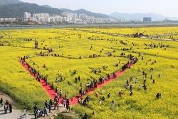 하트모양을 찾아라.부산 낙동강대저유채꽃 축제