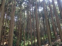 피톤치드 가득한 편백나무숲 장성축령산휴양림