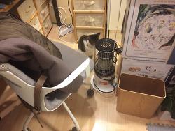 삼선동 희섬정에 놀러간 샴비와 희섬정 고양이 오월이