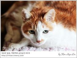 [적묘의 고양이]묘르신 입맛,초롱군의 이상한 요플레사랑,고양이 맞아?