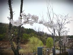 흐려도 봄