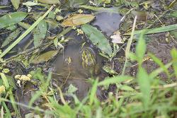 평사리 최참판댁 서희는 금개구리 소리를 듣고 자랐다.