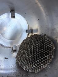 Wasp Hives (말벌집)