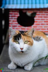 고양이, 점순이.