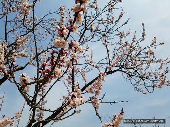 봄꽃, 문화상품으로 피어나다.