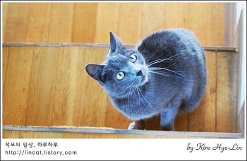 [적묘의 고양이]12살 노묘가 막내일 때, 나이를 먹다,파닥파닥, 월간낚시