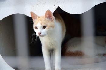 팔공산 뽀뚜르까아저씨에서 만난 고양이