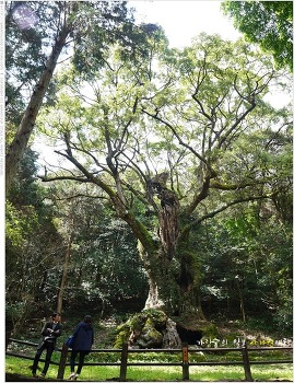 일본 사가현여행 #15 - 다케오 녹나무를 보며 힐링을~