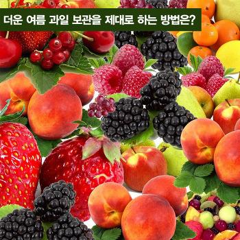 더운 여름  과일 보관을 제대로 하는 방법은?