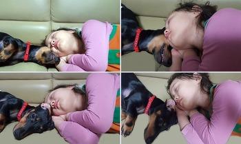귀여운 닥스훈트 ♥ 웰츠 독 연어 ♥ 강아지 저지방 다이어트 사료 출시