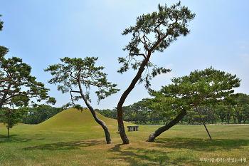[경주여행] 배롱나무꽃과 화려한 소나무의 군무, 경주 오릉