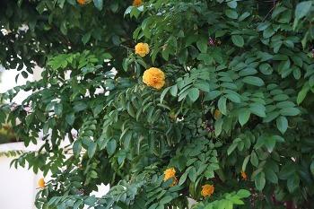 태국의 식물4