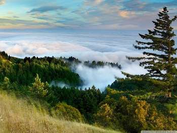 Slope Of Mountain Forest Clouds wallpaper