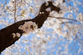경기도 가평 대성리역 북한강 강변길 벚꽃구경 봄 나들이 다녀왔어요 ~ 가평 올레길