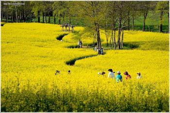 고창 청보리밭 유체꽃