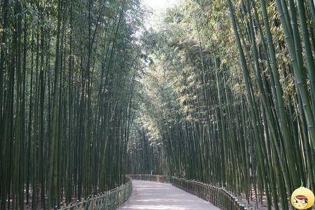 [울산] 태화강 십리대숲 - 대나무가 주는 싱그러움!!