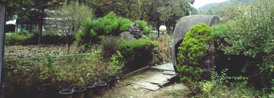 가을 낙엽 밟으며 걷기 좋은 천안의 연꽃 테마공원, 자연누리성