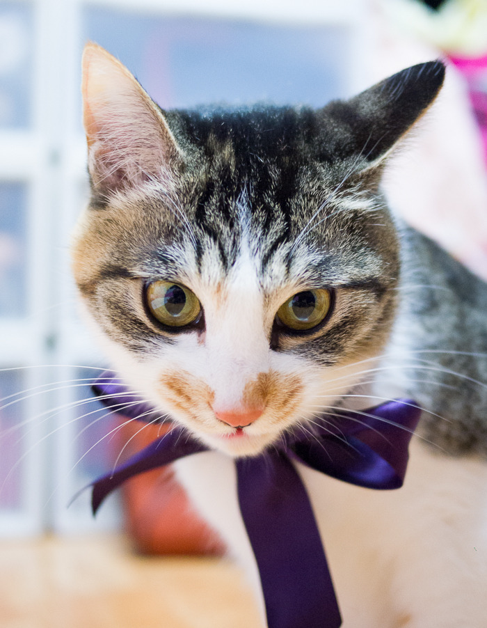 고양이 목에 리본 매기 - 리본을 맨 고양이 아리에티