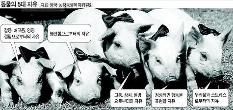 동물학대,가축학대 사진 #1