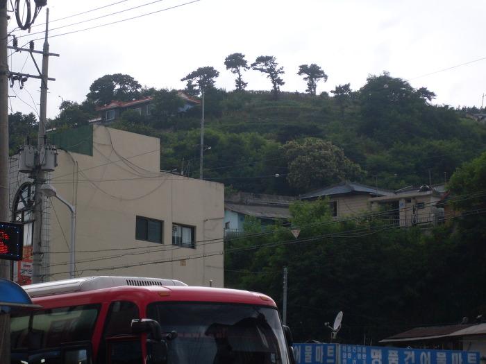 산등성이의 나무 삼총사