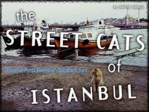 아이패드 사진 이스탄불 거리의 고양이 Street Cats of Istanbul