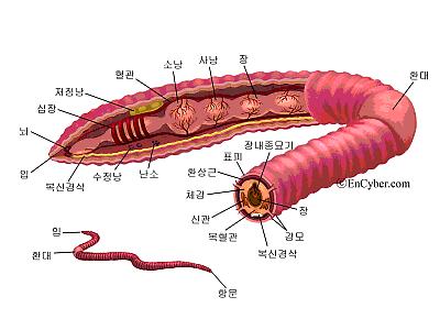 지렁이 구조