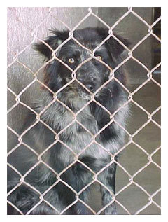 The shelter dog & deaf dog photo book project